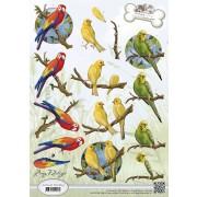 3D ark tropiske papegøjer