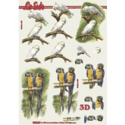 3D ark papegøje og kakadue