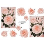 3D ark lyserøde roser
