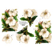3D ark hvide blomster