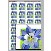 Foldepapir firkantet blå blomst